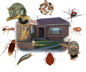 Your House Belongs to You Not Pests